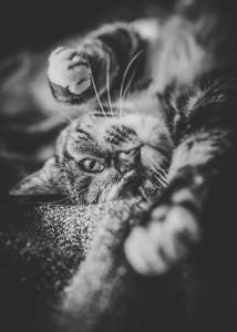kot leżący na plecach