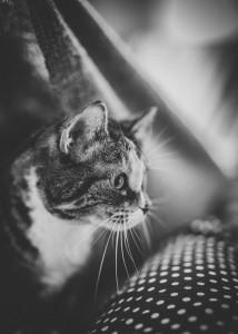 bury kot patrzy w dal