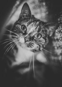 zdjęcie kota pod kocem