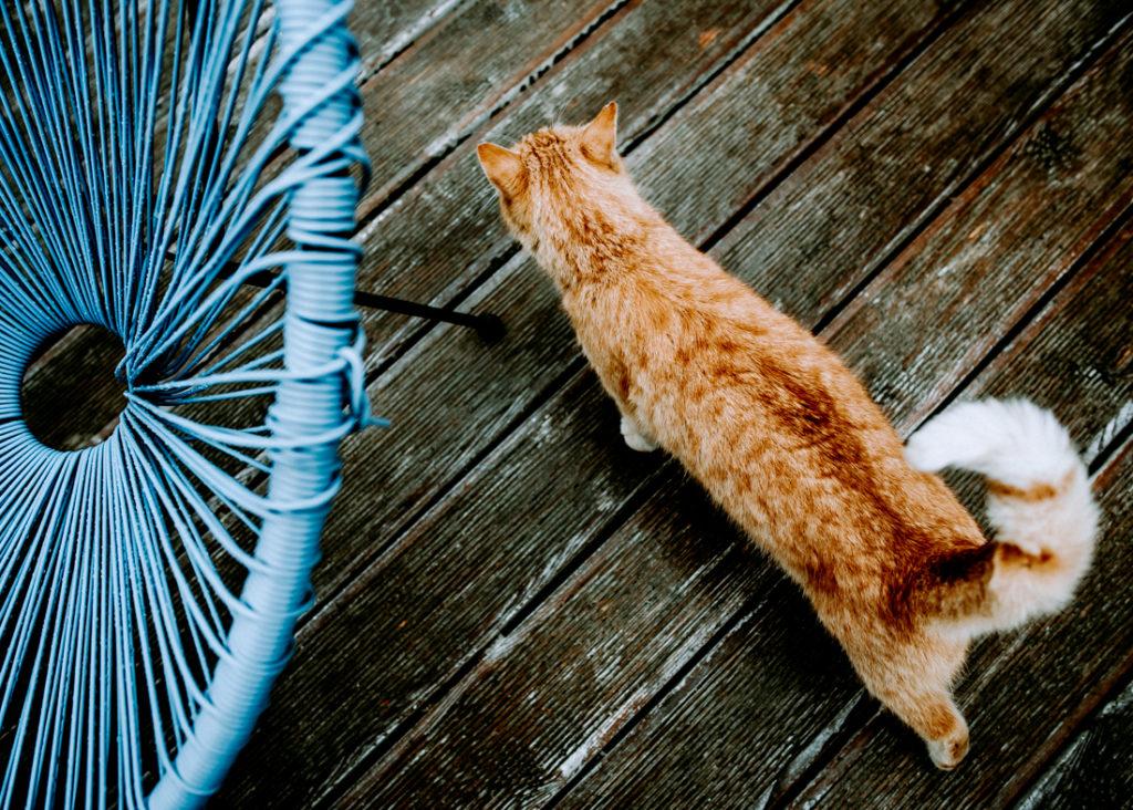 kot na drewnianej podłodze